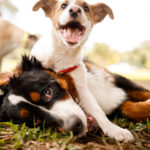 Dogs playing outside | Germantown dog parks